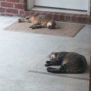 Other - My Fur Babies!!!